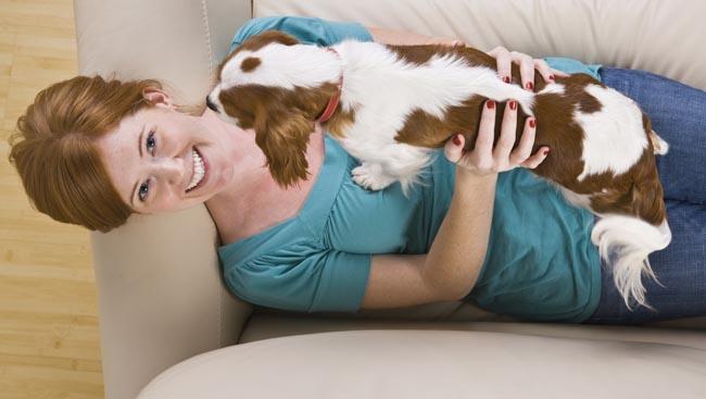 A few pet insurance facts