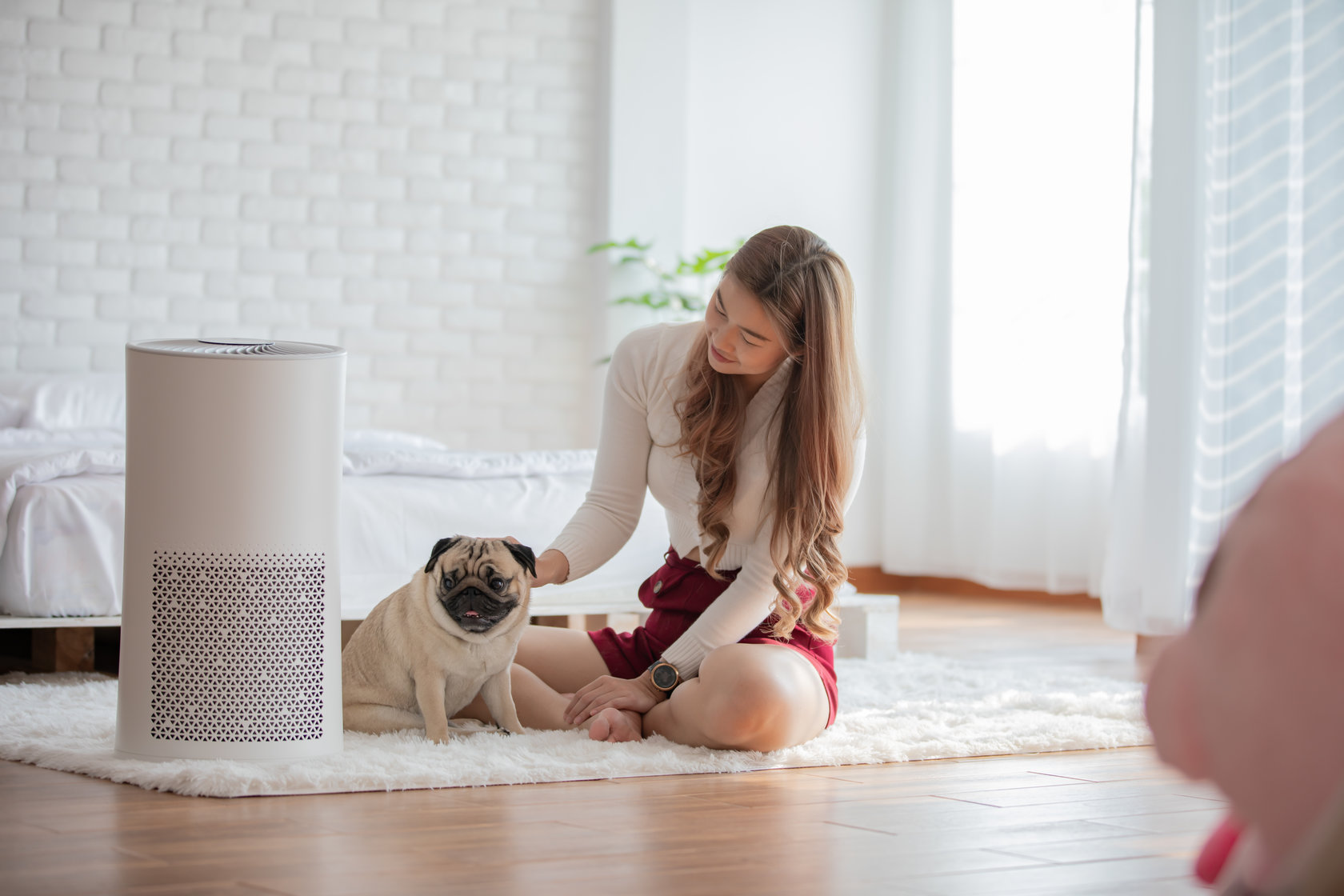 How to Get Clean Air in Your Home