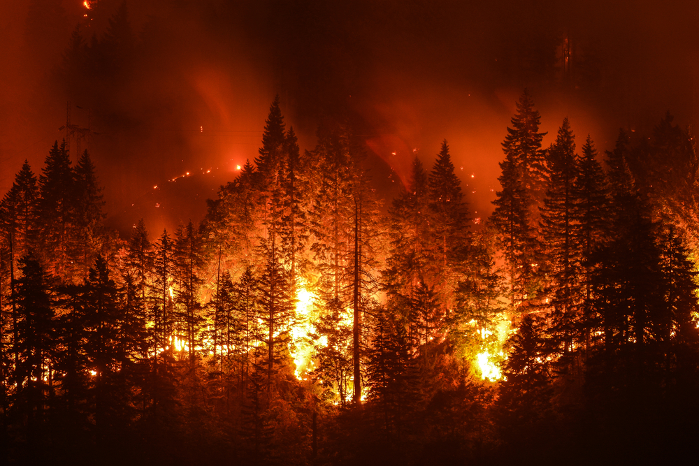 Wildfires and insurance: things you should know